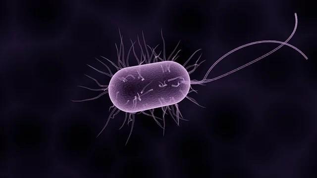 Eficacitatea antibioticelor împiedicată de propriul nostru sistem imunitar